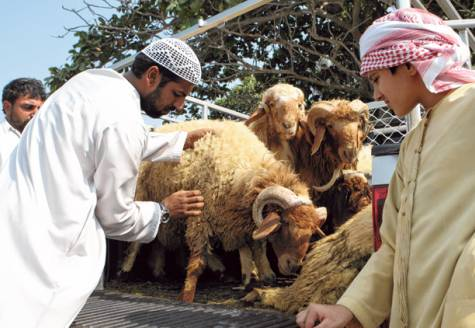 animal tagging in uae