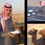 Camel Milk Ice Creams to hit markets soon