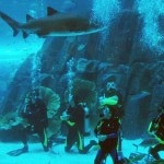 Dubai Mall Aquarium Diving with Sharks
