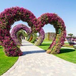Dubai Vertical Garden at Miracle Garden