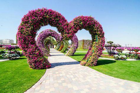 Dubai Vertical Garden at Miracle Garden