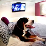 Dubai Municipality to launch Dh54.1m pet hotel by March 2014