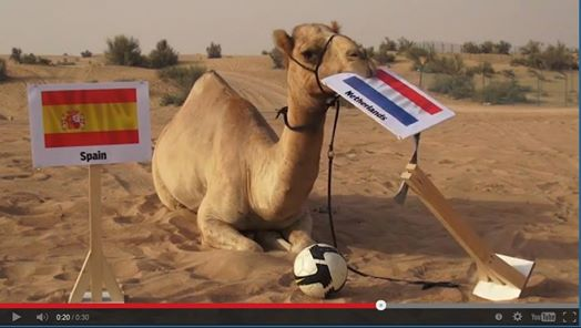 Shaheen the Camel predicts World Cup