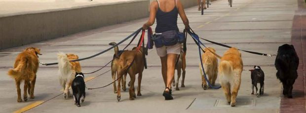 dog walking in dubai