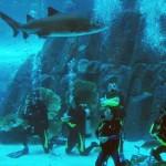 Dubai Mall Aquarium Diving with Sharks