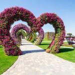 Dubai Miracle Garden to have world's largest Vertical Garden