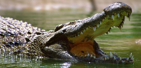 dubai crocodile theme park