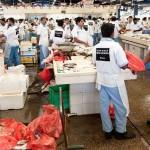 Emiratisation begins at Deira fish market by introducing Emirati Fish Brokers