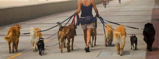 Dog Walking in Dubai